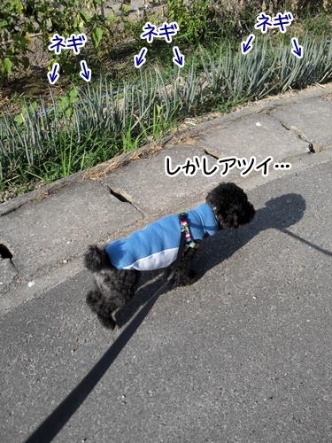 2013081921514361c.jpg