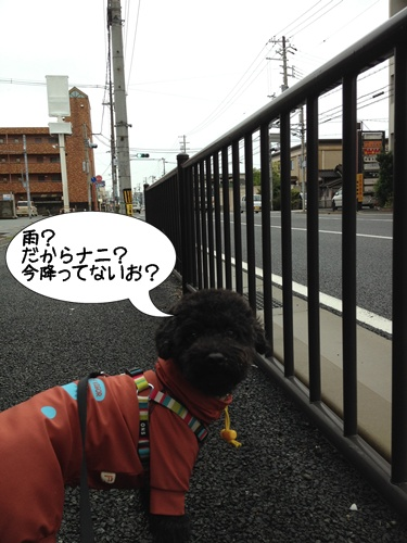 2013102021312839c.jpg