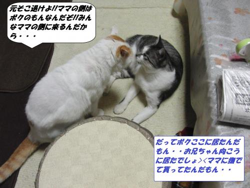 CIMG5508_convert_20131112094646.jpg