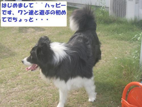 P6220022_convert_20130623095556.jpg