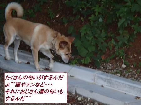 P9090661_convert_20130911060311.jpg