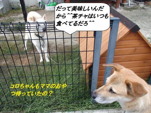 PA095442_convert_20131010093516.jpg