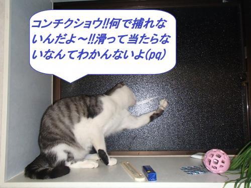 PA115481_convert_20131012093718.jpg