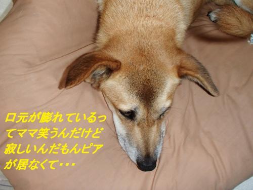 PA145504_convert_20131014093022.jpg