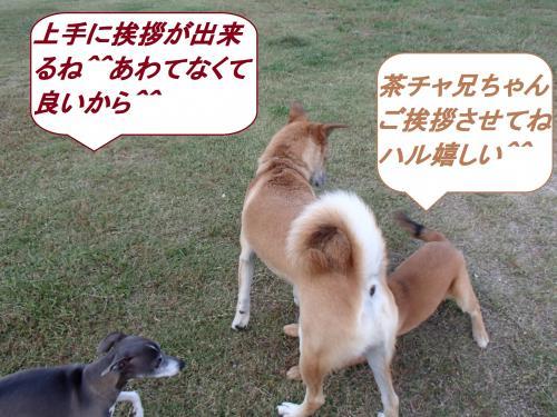 PA145517_convert_20131015094040.jpg