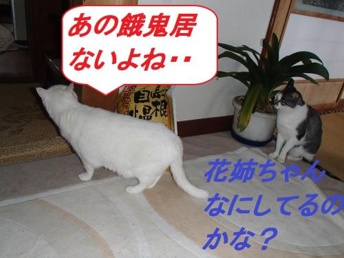 PA235592_convert_20131024095037.jpg