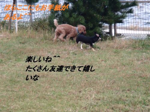 PA285662_convert_20131029070133.jpg