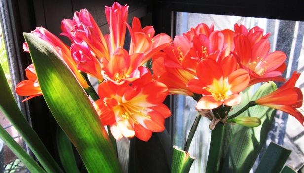 温室の花IMG_3422@
