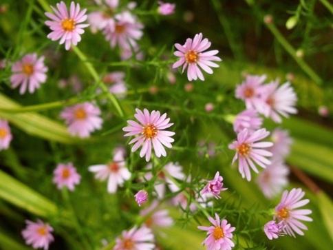 my-garden 028 (4)
