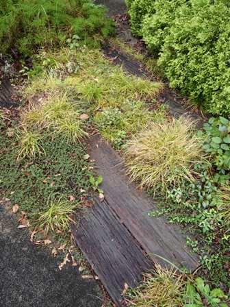my-garden 006 (6)