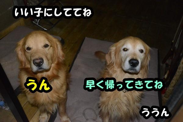 DSC_6407_20140130205521684.jpg