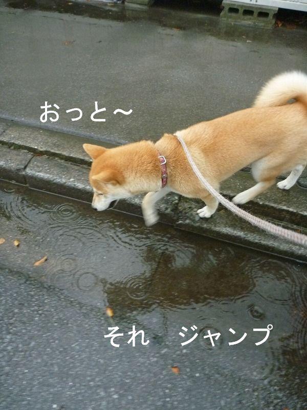久々の雨に感謝