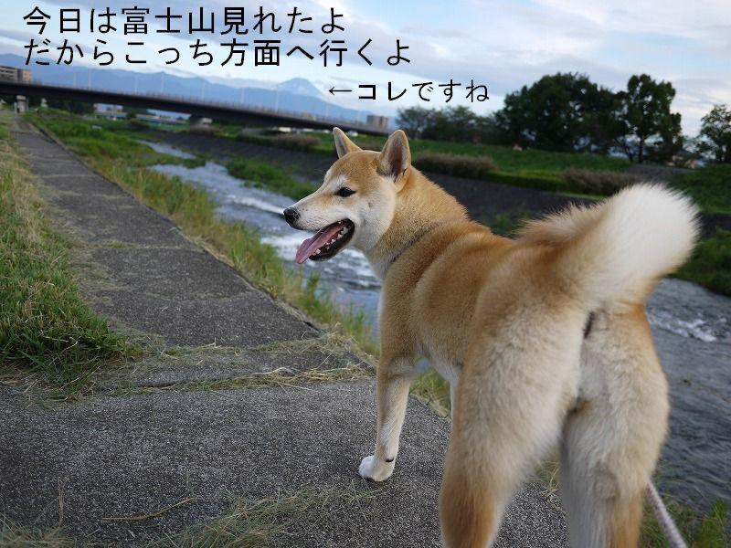 嬉しいお散歩時間