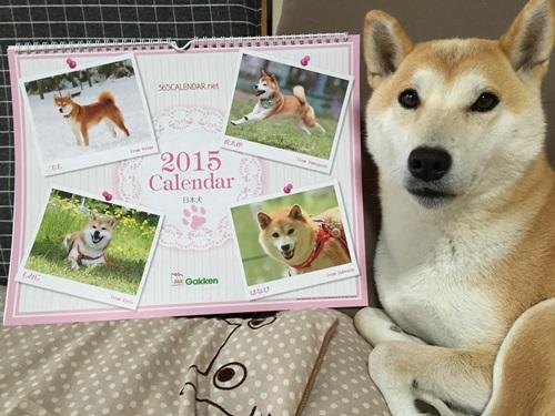 2015年365カレンダーゲット!!