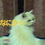 20130531192529e45.jpg