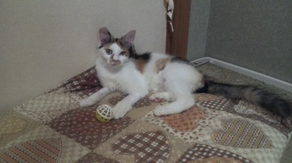 元の美ネコ