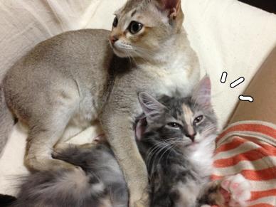 fc2blog_201309160036347e0.jpg