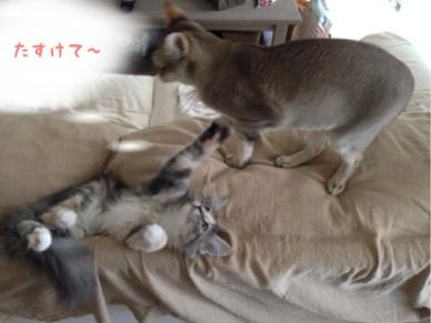 fc2blog_2013092816135921f.jpg