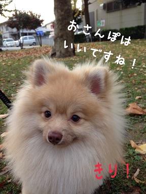 20141120125138cf4.jpg