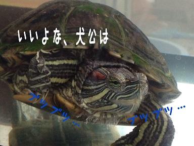 20141120125154ee2.jpg
