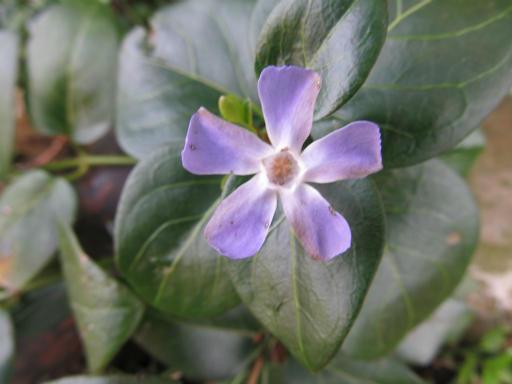 20120401・春の花02