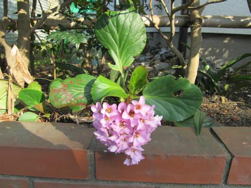 20120401・春の花17
