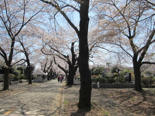 20120408・多磨霊園13
