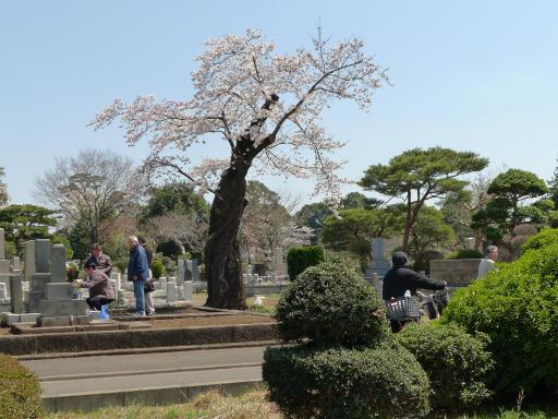 20120408・多磨霊園L02