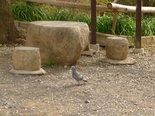 20120410・近所の桜1-03