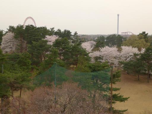 20120410・近所の桜2-12