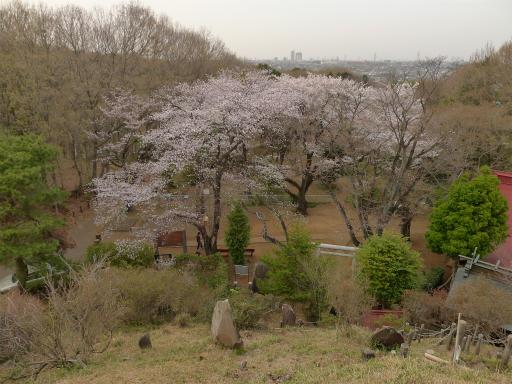 20120410・近所の桜2-11