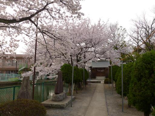 20120410・近所の桜3-14