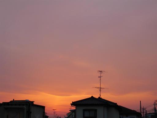 20120410・近所の桜3-22
