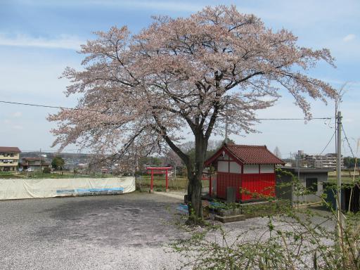 20120415・緑の森・空04・都稲荷の桜