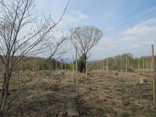 20120415・緑の森・空02