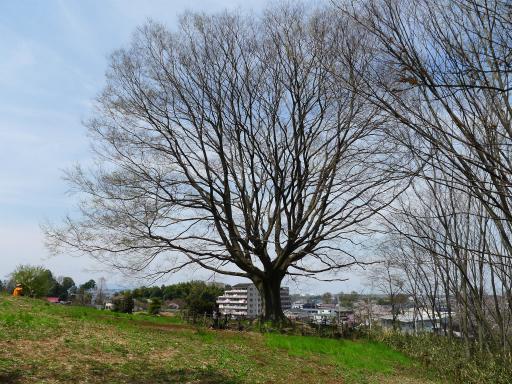 20120415・緑の森・空12L・アントニオエノキ