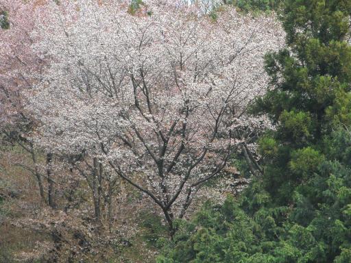 20120415・緑の森1-11
