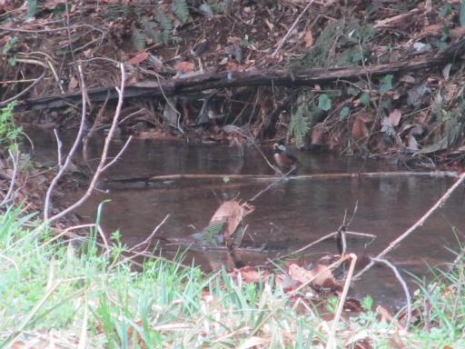 20120415・緑の森1-09・ヤマガラ