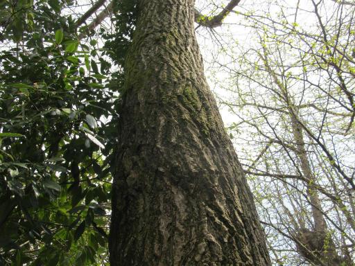 20120415・緑の森2-10