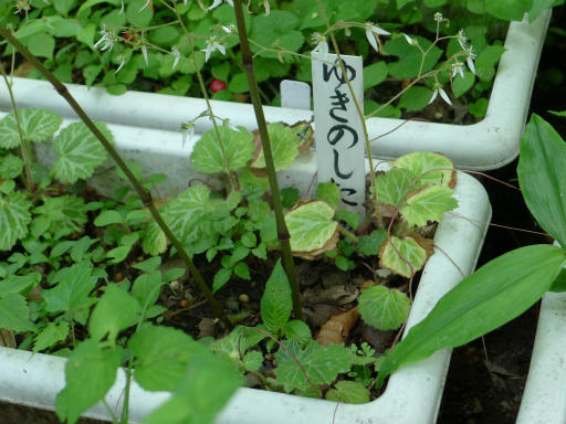 20120607・牧野2-17