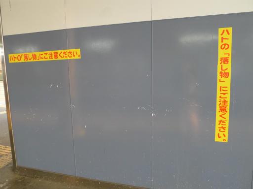 20120607・牧野4-10