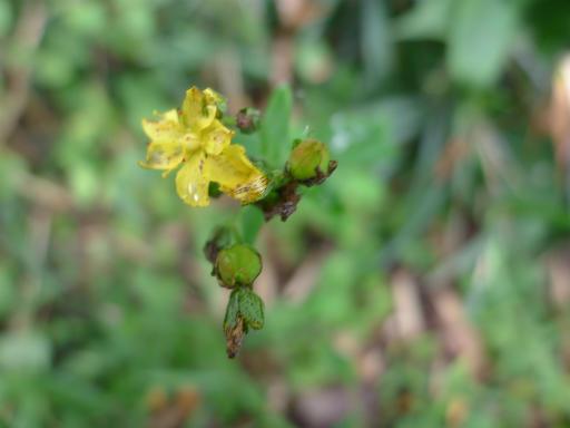 20120902・緑の森2-07