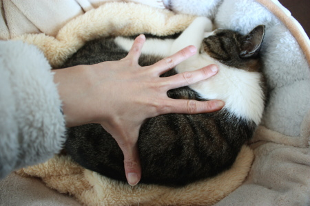 ミルラの手