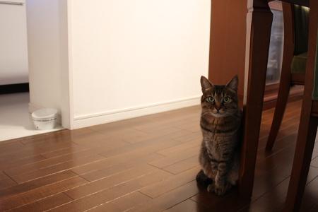 食事の用意を2猫前頼みます
