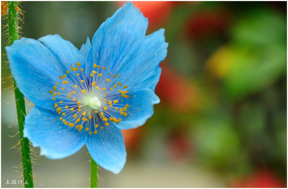 咲くやこの花館4