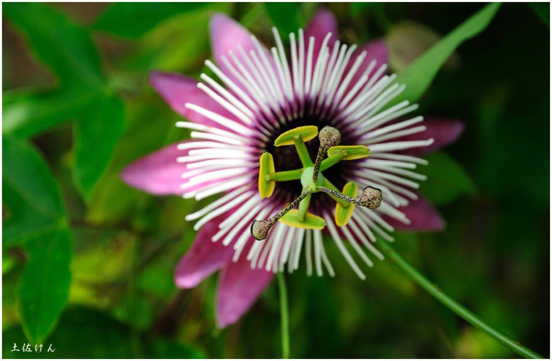 咲くやこの花館5