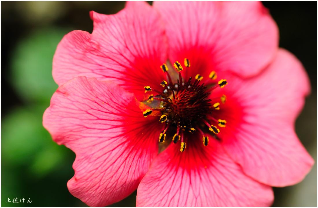 咲くやこの花館6