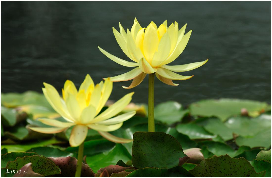 咲くやこの花館1