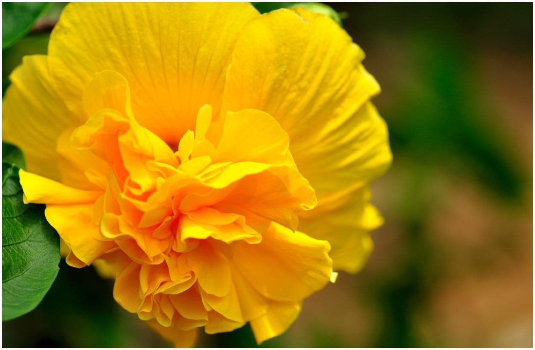 咲くやこの花館・助手2