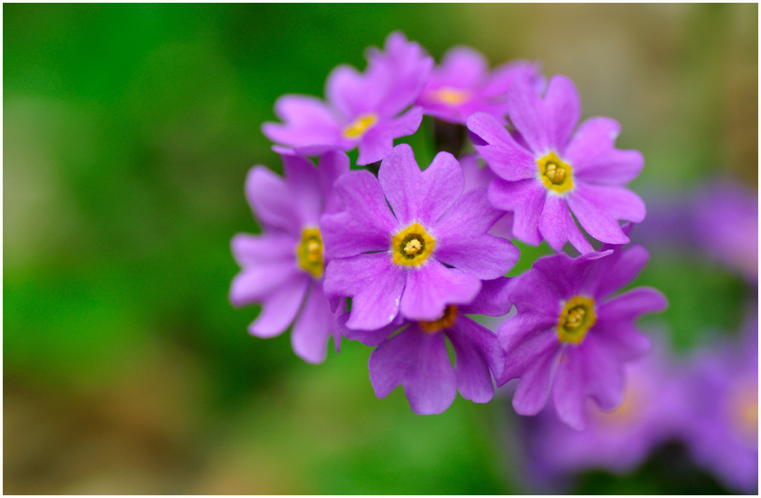 咲くやこの花館・助手4